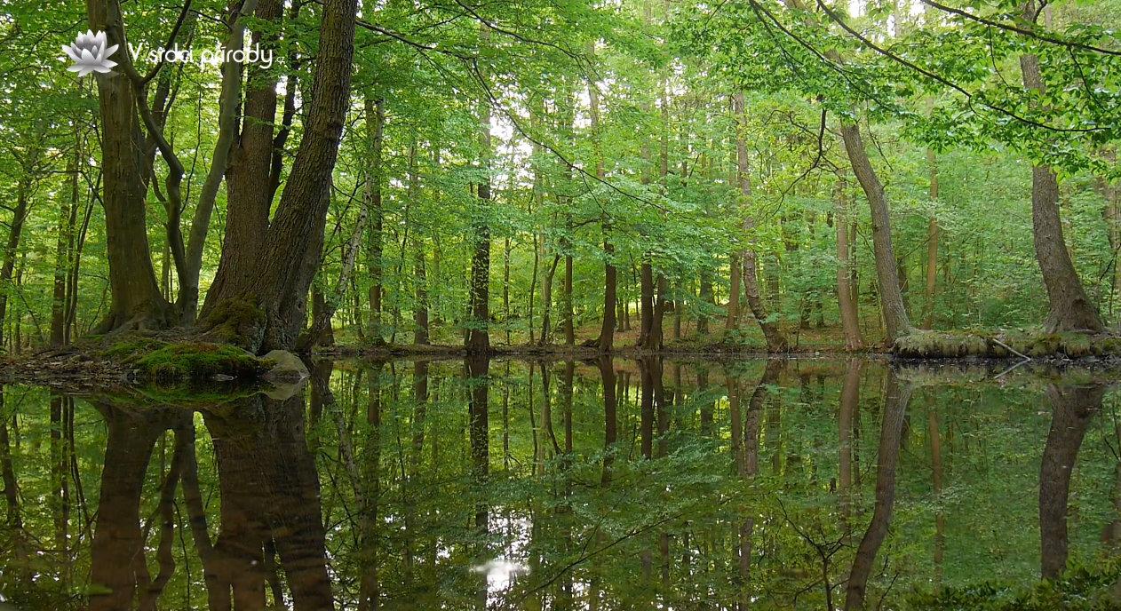 Video: Relaxace v lese u rybníku
