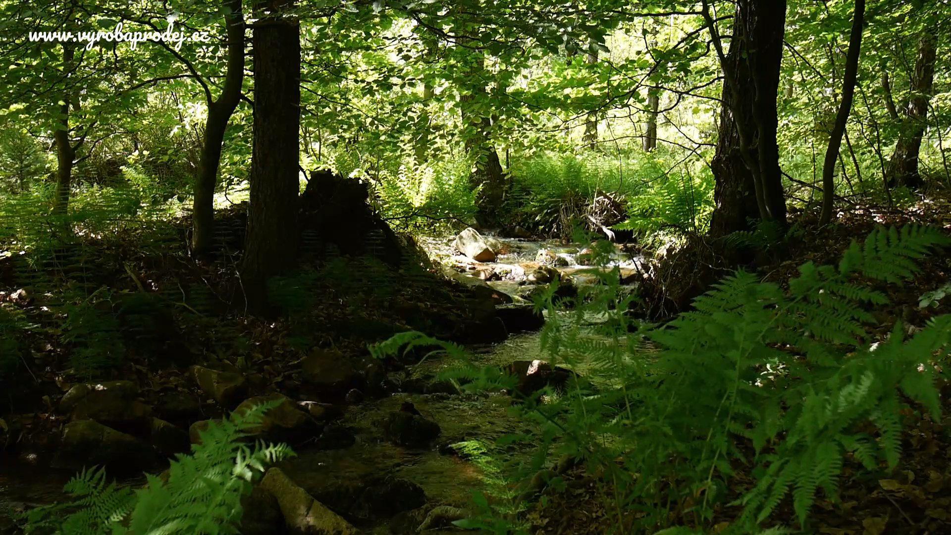 Relaxace v přírodě - Potok v Drahůnkách